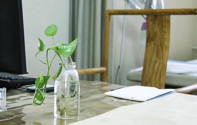 Arbeitsplatz mit Pflanze